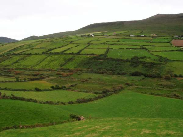 Dingle Landscape 2