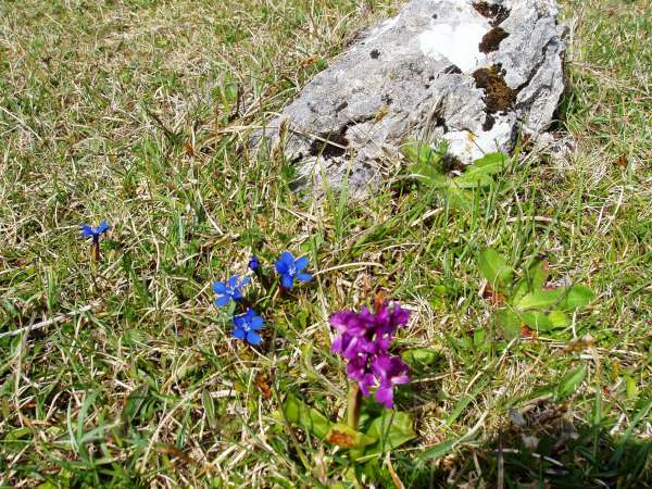 The Burren in Bloom